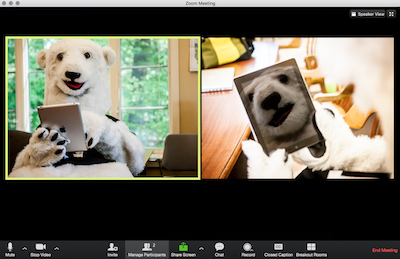 Bowdoin's mascot joins a Zoom information session